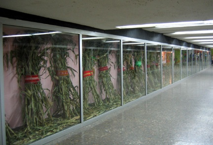 Installation View, Metro Alameda, Left Side