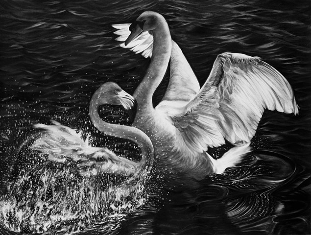 Flamingo vs. Swan