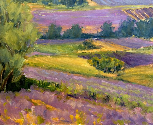 Patches of Purple in Provence, Lavender Fields at Sault 2014