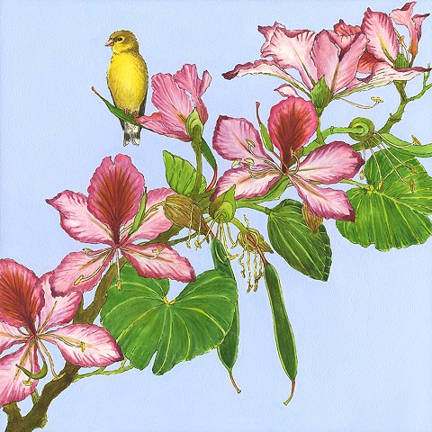 finch, yellow finch, goldfinch, pink flower tree, pink blossoms, blossom, flowery, flowered tree, pink flowers, pods, birds, birds in art