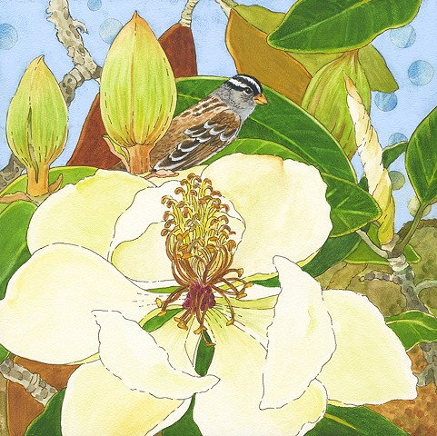 sparrow, white crowned sparrow, birds, birds in art, magnolia, magnolia tree, trees