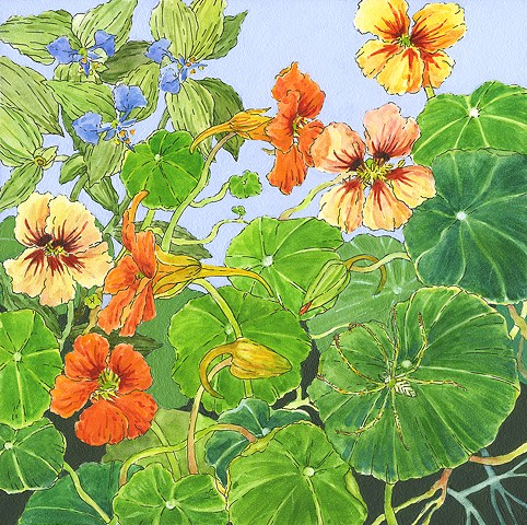 spider, green spider, nasturtiums, garden, orange, flowers, flowers in art, ojai
