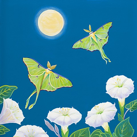 luna moth, luna, moon, moonflowers, datura, moths, full moon, luna moths male and female, night sky