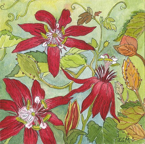 passion flowers, red passion flowers, flowers, flowers in art, botanical, ojai