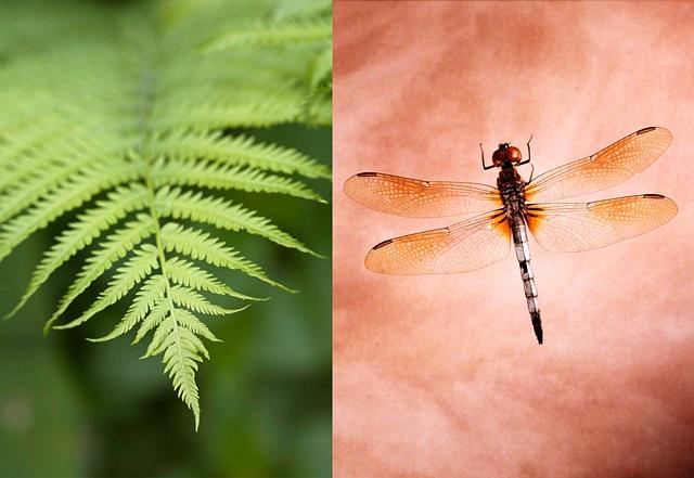 Fern / Dragonfly