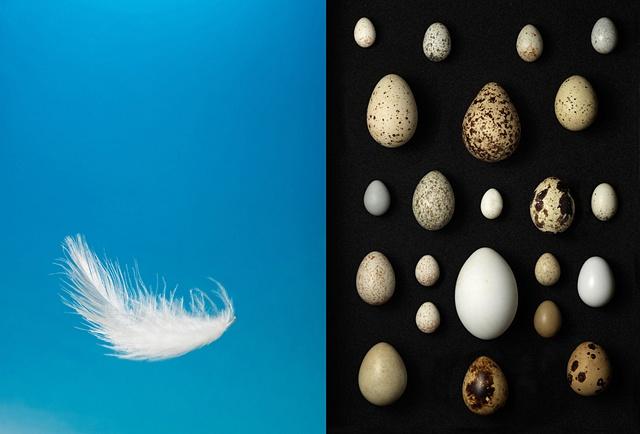 Feather / Wild bird eggs