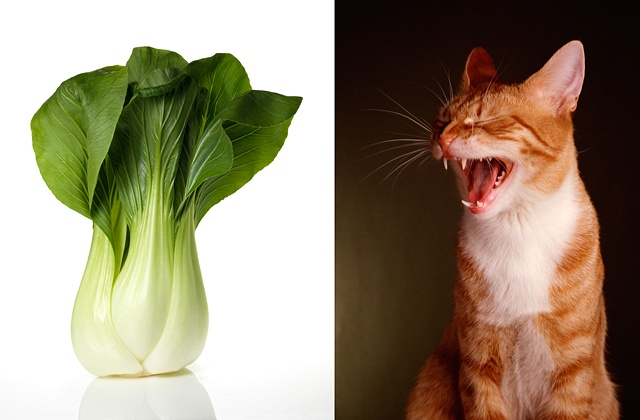 Bok choy / Orange tabby cat