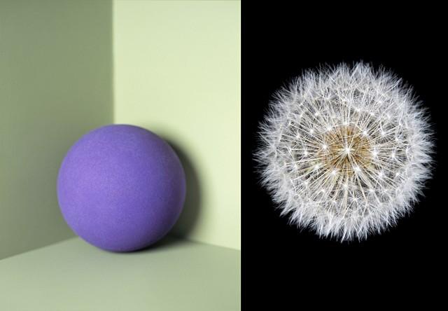 Purple ball / Dandylion seeds