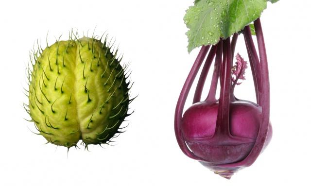 Jimson weed pod / Purple kohlrabi