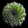 Thika pod / Cactus