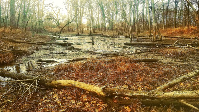 Late Autumn Woods near the Des Plaines River