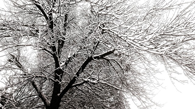 Snow Reveals the Structure of Nature
