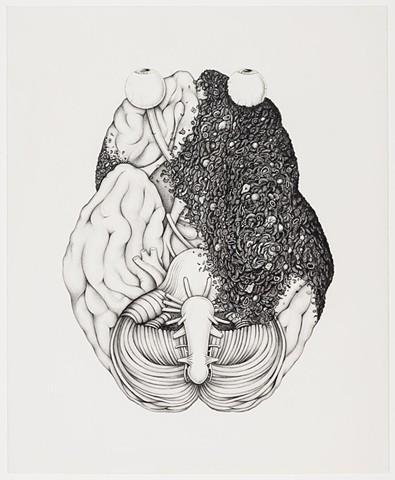 Michael Tarbi contemporary graphite drawing of anatomical brain
