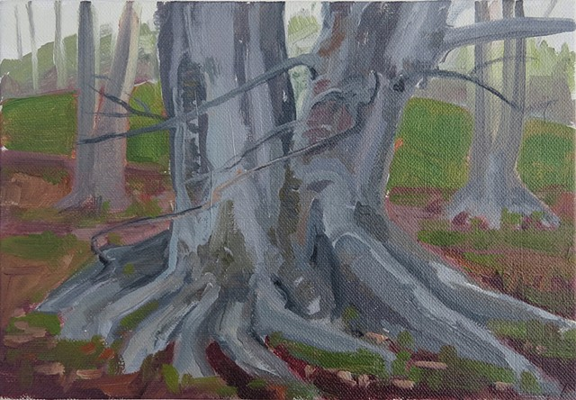 Tree Study, Crane Estate, Ipswich, Mass