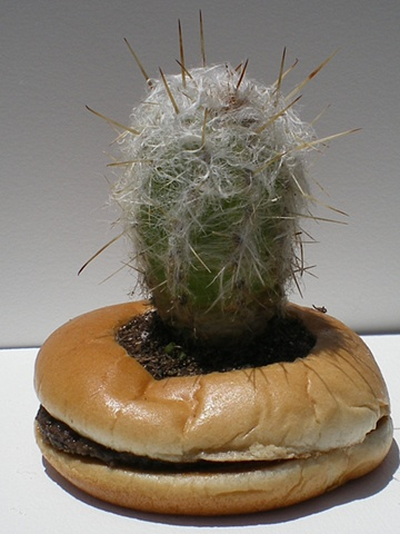Hamburger Planter #4
