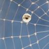 Web of Surveillance (detail)