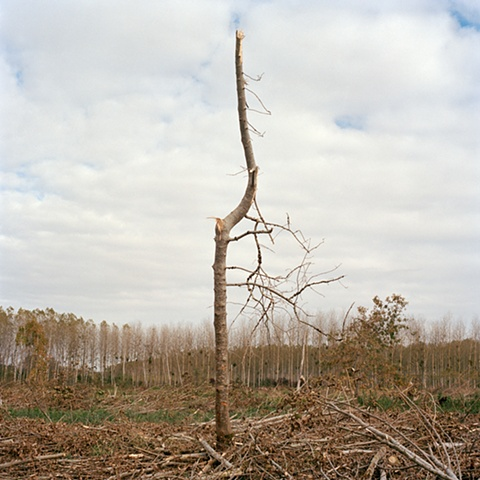 Untitled from the series The Earth Swallowed (2011 in progress)