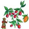 Illustration for Adina Miracle Juice