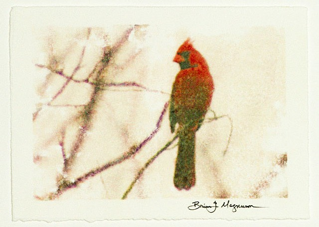 northern cardinal fine art photograph