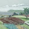 Freolbink Farm Spring Fields