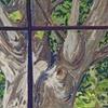 Tree Outside Window, Summer