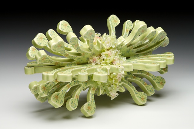 Ornate Pinaceae